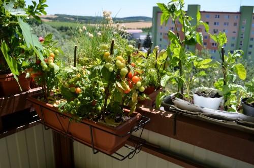 Balkonová zelenina